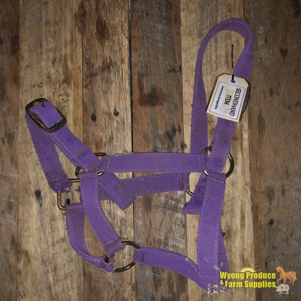 Halter Purple Pony