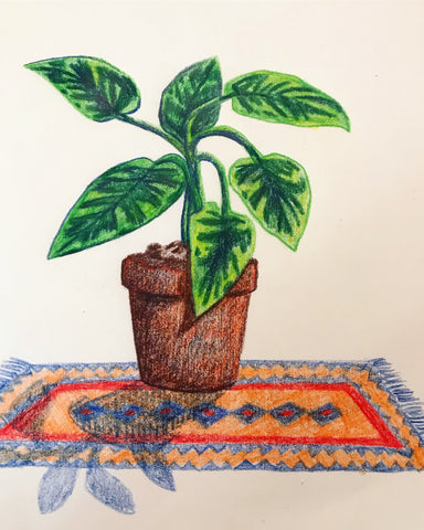 Colourful plant drawn by Chelsey Wilson