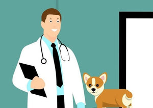 What a Relief! How to Maximize Your Career as a Relief Veterinarian