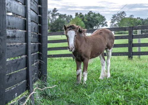 Managing the Sick Foal in the Field
