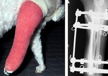 Start Now! Tibial & Radial Fracture Repair in Dogs in Daily Practice