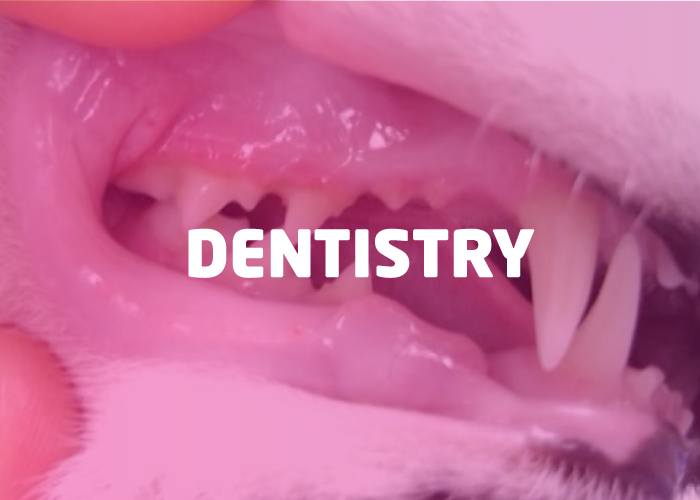 Dentistry Bundle