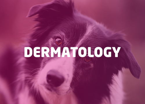 Dermatology Bundle