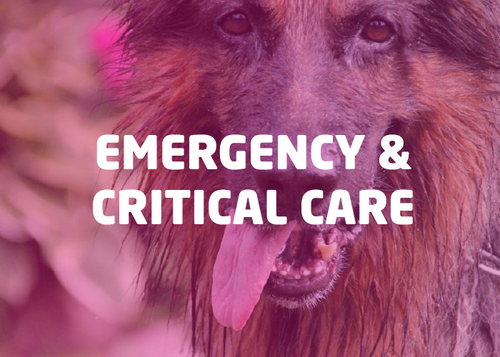 Emergency & Critical Care Bundle