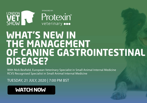 What's New in the Management of Canine Gastrointestinal Disease?