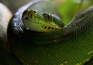 Anesthesia and Critical Care of Reptiles