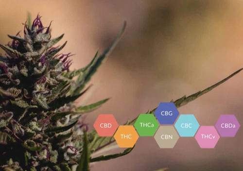 Medical Cannabinoids - a Review