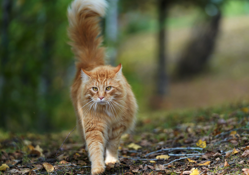 Prevention of Infections in Cats