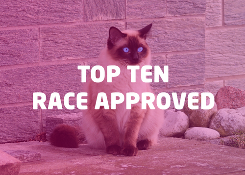 Top Ten RACE Approved Bundle