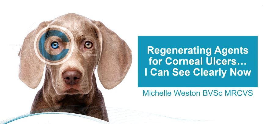 Regenerating Agents for Corneal Ulcers – I Can See Clearly Now