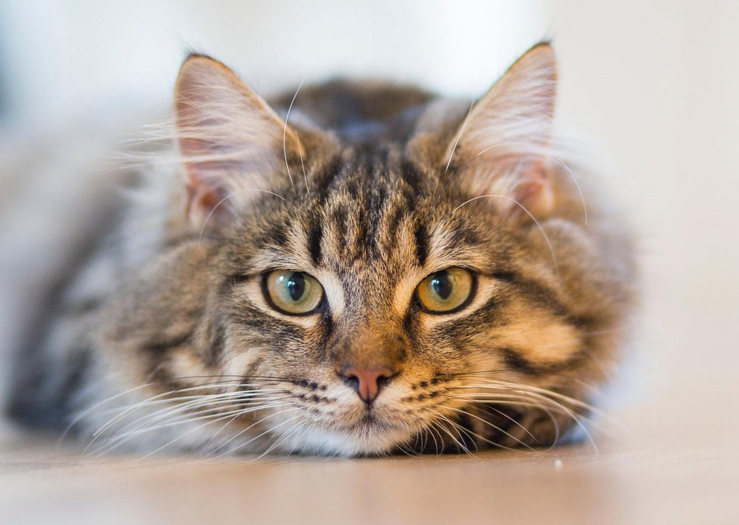 What's Plan B? For the Cat with Chronic Kidney Disease