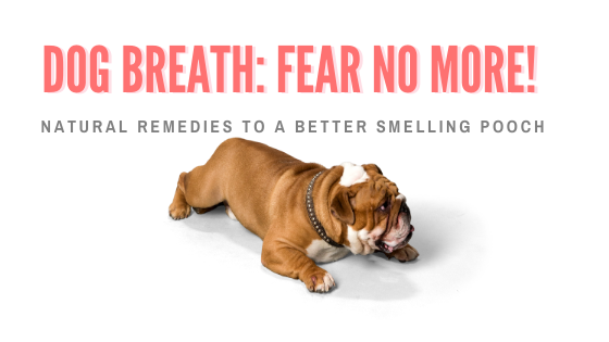 natural remedies for bad breath in dogs
