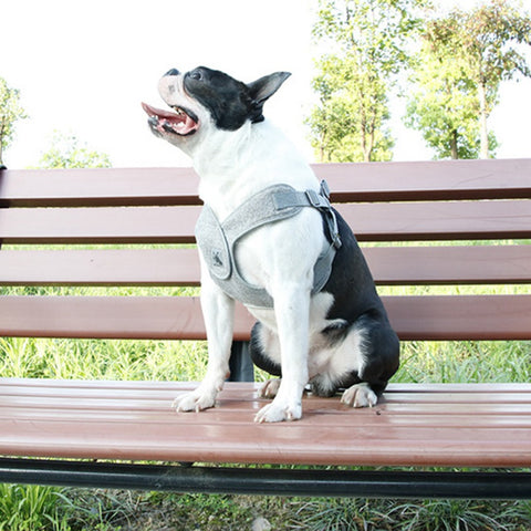 stylish no pull harness for dogs