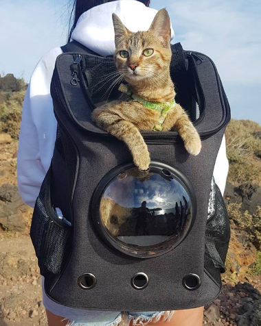 backpack carrier for large cats dog carrier backpack