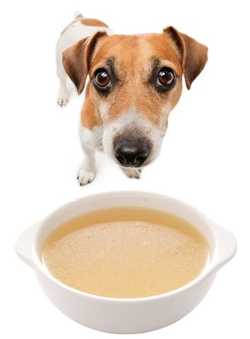 hacks for traveling with dog, chicken broth against motion sickness