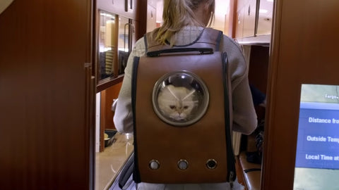 taylor swift shows off fat cat backpack in latest video americana