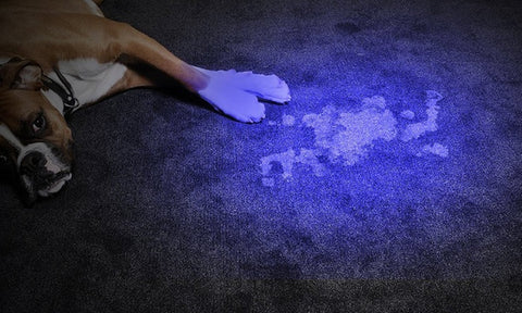 ultraviolet flashlight for finding pee stains