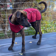 Large Dog Waterproof Warm Winter Jacket