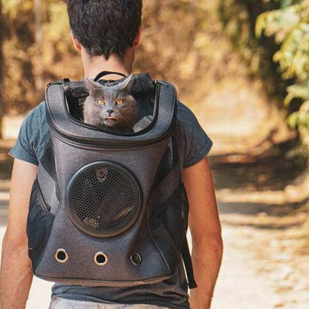 The Chubby Cat Backpack for Large Cats & Small Dogs-pet carrier-Baxter & Bella