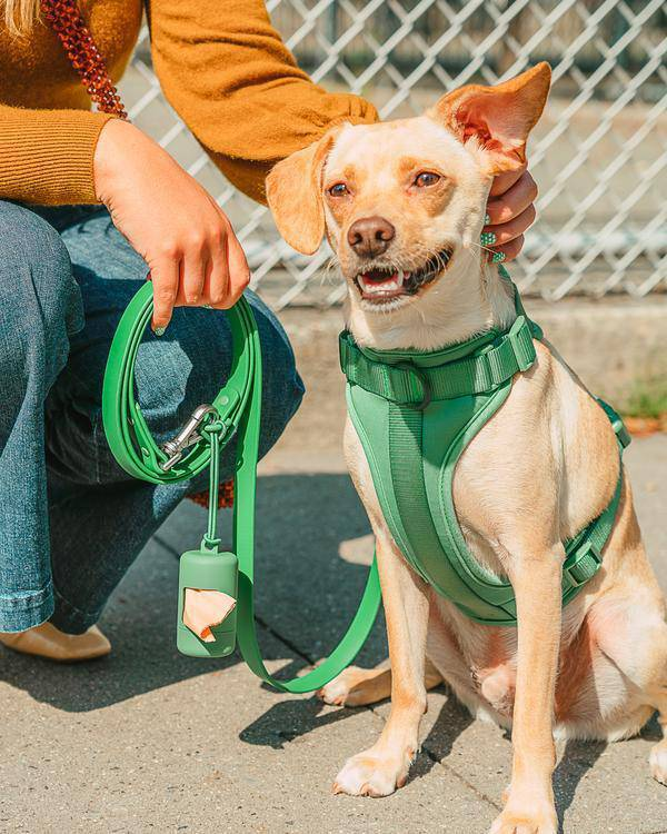 Let's go on a walk // The Ultimate Dog Walking Kit