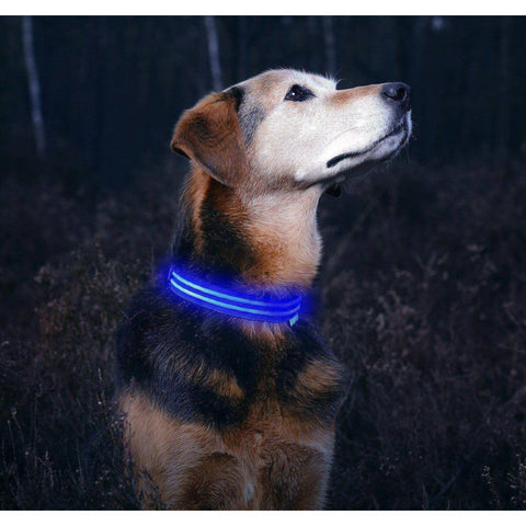 LED Pet Collar-collar-Baxter & Bella