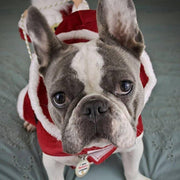Christmas Dog Costume with Santa - Small to Large Dogs-dog costume-Baxter & Bella