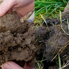 LANDWORKERS' SKILLS: SOIL HEALTH FOR GROWERS