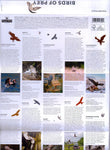 Birds of Prey u/m stamp presentation pack