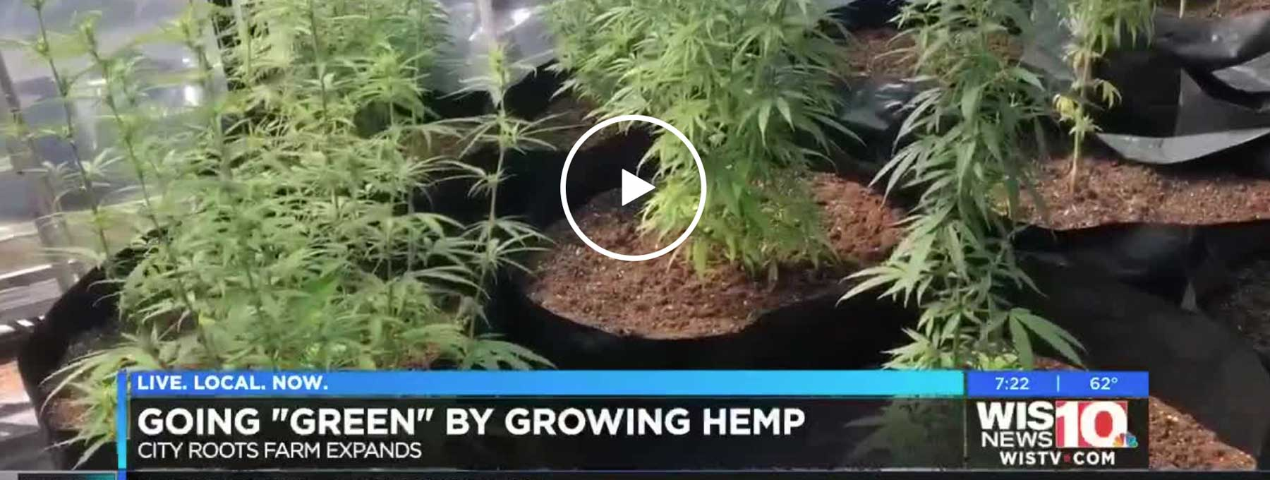City Roots CBD Featured on WIS News
