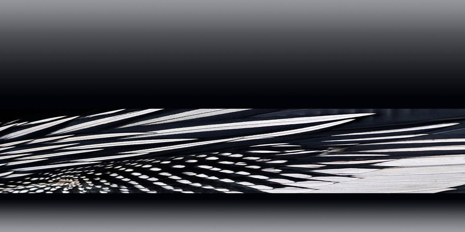 D/Luca Feather Chrome Black - Artwork