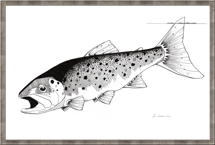 Tailing Sea Trout