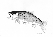 Load image into Gallery viewer, Tailing Sea Trout