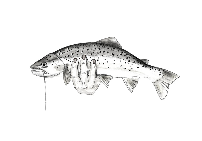 Handheld brown trout - BW