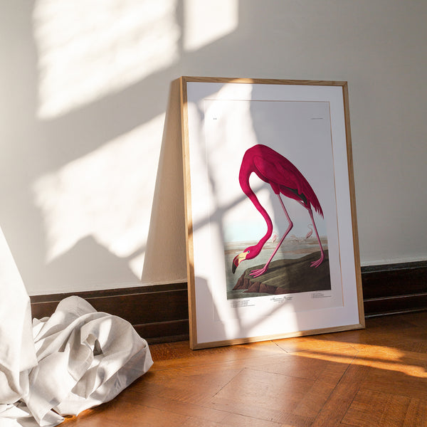American Flamingo |  Unframed