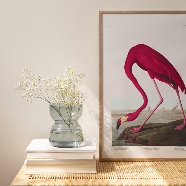American Flamingo |  Framed Print