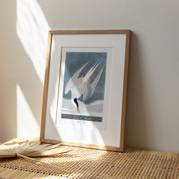 Arctic Fern |  Framed & Mounted Print