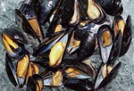 Black Shell Mussels- Steamed
