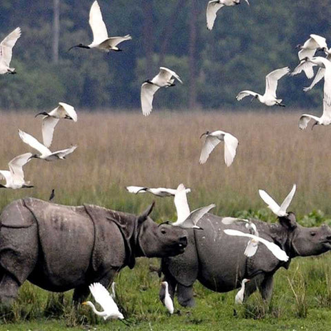 Kaziranga-National-Park-wildlife-tour-geological-Park-Serendipity-holidays-hyderabad-india-telangana-800-800
