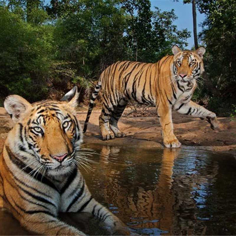 Sundarbans-tour-packages-tiger-Serendipity-holidays-hyderabad-india-telangana