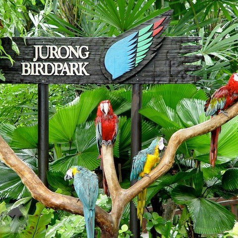 jurong-birdpark-Singapore-Best-tours-packages-serendipity-holidays-hyderabad-telangana-india-600x600