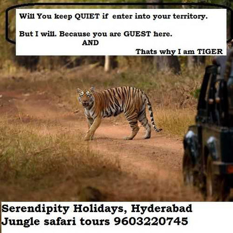 Kanha-safari-tours-wildlife-from-Hyderabad-india-serendipity-holidays