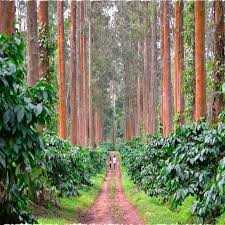 COORG 2 NIGHTS 3 DAYS FROM HYDERABAD - 2019