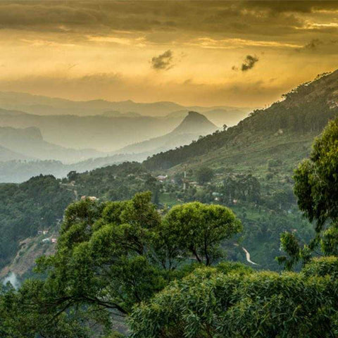 OOTY TOUR PACKAGES FROM HYDERABAD 2 NIGHTS 3 DAYS - QUEEN OF SOUTH INDIA