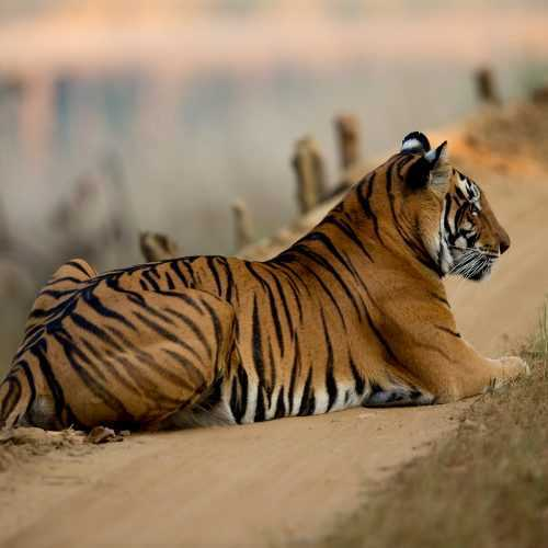 NAGZIRA NATIONAL PARK  WILDLIFE TOURS 3NIGHTS 4DAYS