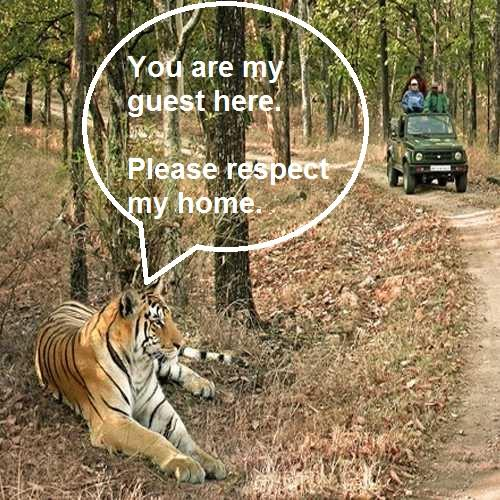 WILDLIFE TOUR PACKAGES IN INDIA - WILDLIFE SAFARI, PENCH NATIONAL PARK 2NIGHTS 3DAYS
