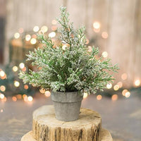 Potted Icy Cedar