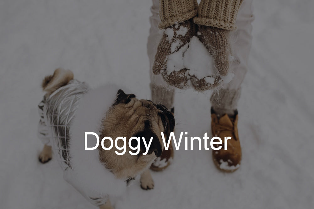 Doggy Winter