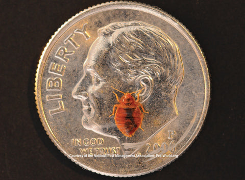 A bed bug on a dime shows the relative size which is that of an appleseed. Bed bug heat machines kill bed bugs.