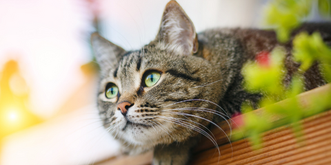 Tabby cat with green eyes outside