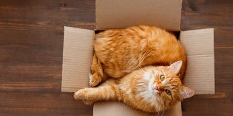 Ginger cat sitting in cardboard box looking up